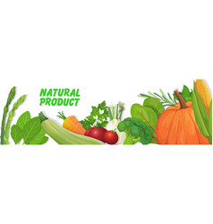 Fresh vegetables and herbs composition healthy vector