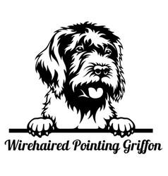 wirehaired pointing griffon peeking dog - head vector image