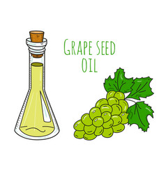 Colorful hand drawn grape seed oil bottle vector