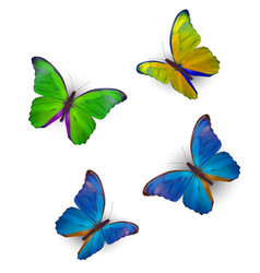 butterfly set isolated on white realistic vector image vector image