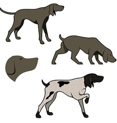 Set of hunting dogs vector