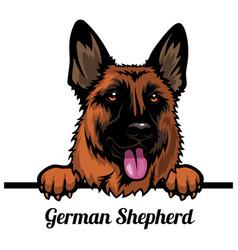 German shepherd dog - dog breed color image a vector