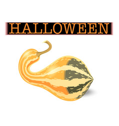 halloween pumpkin elongated striped gourd vector image
