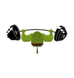 strong spinach and barbell healthy useful plant vector image