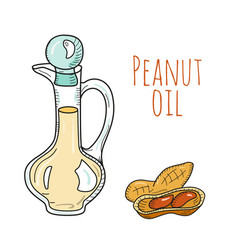 colorful hand drawn peanut oil bottle vector image vector image