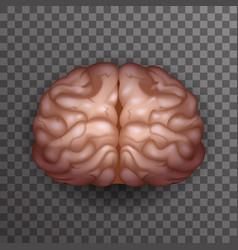 human brain realistic 3d poster transparent vector image