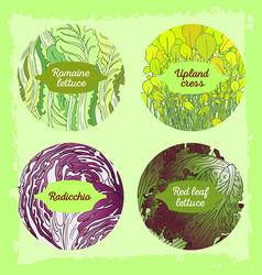 4-mix lettuce set vector