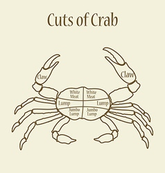 Cuts of crab vector image