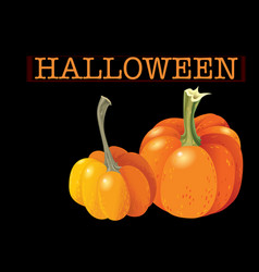 halloween pumpkin set two orange gourds isolated vector image