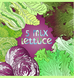 5-mix lettuce vector image
