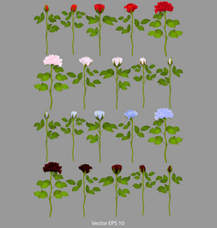 Roses1 vector