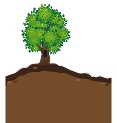 Tree with lush foliage vector