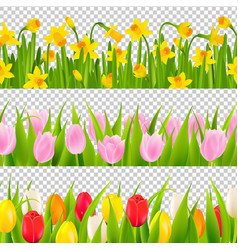 tulip and narcissus border with transparent vector image vector image