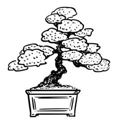 Cartoon bonsai pine tree vector