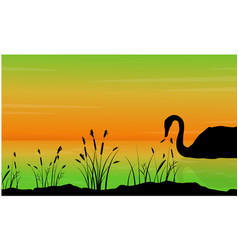 On the lake swan scenery silhouettes vector