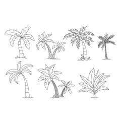 palm trees coloring book beautiful palma vector image