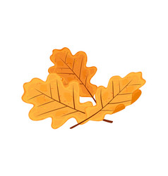 Yellow and orange senescent leaves oak tree vector
