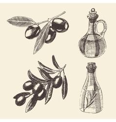 Olive Branch Bottle Set Hand Drawn vector image