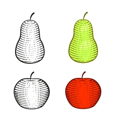 red apple and green pear graphic contour and color vector image