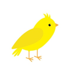 Canary bird Yellow feather White background vector image vector image