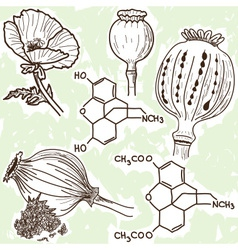 narcotics - poppy and opium vector image