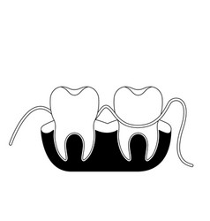 teeth and gums with dental floss between them in vector image