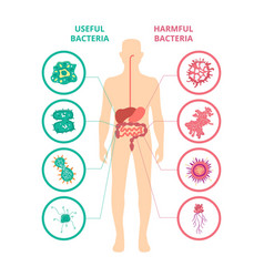 Useful and harmful bacteria - human body poster vector