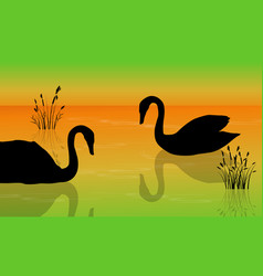 At sunrise swan on the lake scenery silhouettes vector