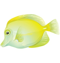 Yellow tang vector image vector image