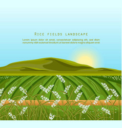 Rice fields landscape sunshine background vector