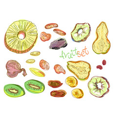 Dehydrated fruit set vector