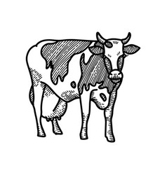 hand drawn sketch spotted cow with big milk vector image