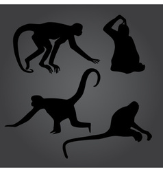 monkey shadows silhouette set eps10 vector image