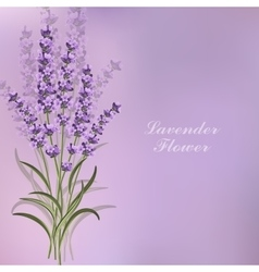 Beautiful lavender flowers on violet background vector
