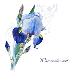 Blue iris watercolor vector