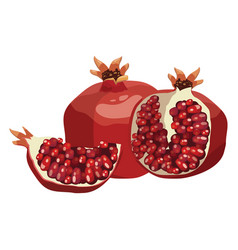 cartoon pomegranate a pomegranate vector image