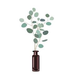 Eucalyptus branches in a dark bottle vase on the vector