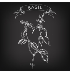 sketch of basil for design vector image