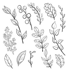 doodle leaves and plants vector image vector image
