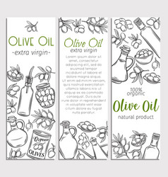 Banner template olive oil vector