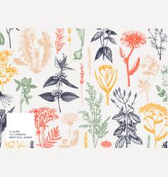 Hand drawn medicinal herbs banner design in color vector