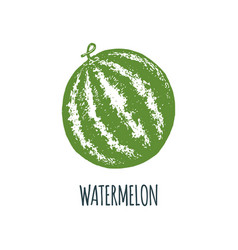 hand drawn watermelon on white background vector image