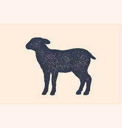 lamb sheep concept design farm animals vector image