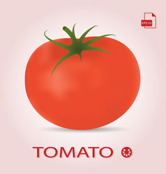 Single fresh ripe tomato isolated on a background vector