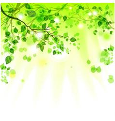 Spring leaves light background vector