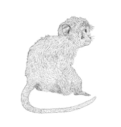 Hand drawn sitting monkey Sketch style vector image