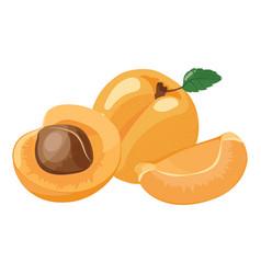 Cartoon apricot fresh vitamin fruit juicy sliced vector
