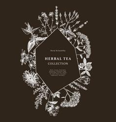 hand drawn medicinal herbs frame design on vector image