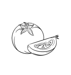 Hand drawn tomato sketches on white background vector image