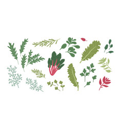 Set fresh green herbs and spices raw organic vector